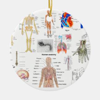 Adorno De Cerámica Diagramas médicos de la anatomía humana coloreados