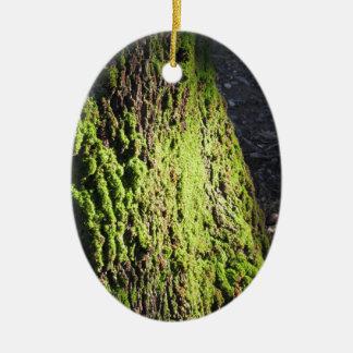 Adorno De Cerámica El musgo verde en el detalle de la naturaleza del
