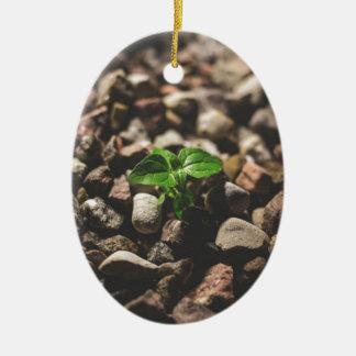 Adorno De Cerámica Planta frondosa verde que comienza a crecer en los