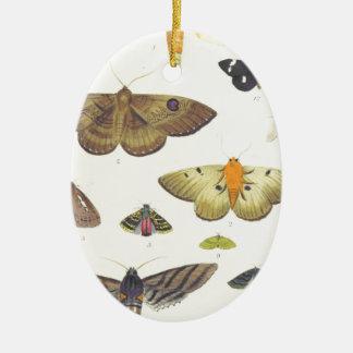 Adorno De Cerámica Polillas y mariposas de Nueva Zelanda