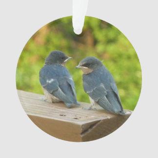 Adorno Fotografía del pájaro de la naturaleza de los