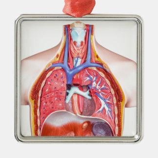 Adorno Metálico Cuerpo humano interno modelo en el fondo blanco