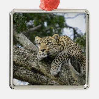 Adorno Metálico Gato salvaje animal del safari de África del árbol