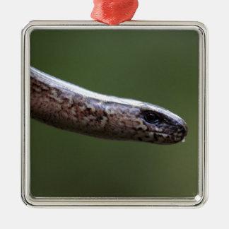 Adorno Metálico Jefe de un Slowworm, Anguis fragilis