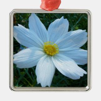 Adorno Metálico Luz del sol en la flor blanca del cosmos