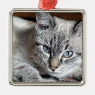 Adorno Metálico Mascota de la caballa de Mieze del gatito del gato