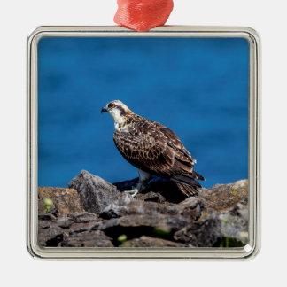 Adorno Metálico Osprey en las rocas