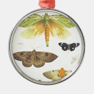 Adorno Metálico Polillas y mariposas de Nueva Zelanda