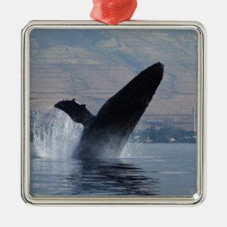 Adorno Metálico violación de la ballena del humback