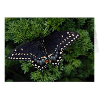 Adulto negro del swallowtail tarjeton
