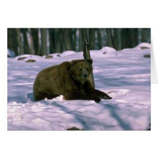 Adulto Oso-joven del grisáceo en maderas nevosas Tarjeta De Felicitación