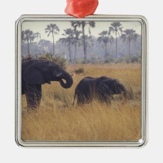 ÁFRICA, Botswana, elefante africano Ornamentos De Reyes Magos