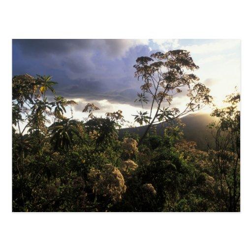 África, Tanzania, área de la protección de Ngorong Tarjeta Postal