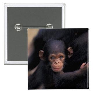 África, Tanzania, parque nacional de Gombe, ligón, Chapa Cuadrada 5 Cm