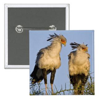África. Tanzania. Secretaria pájaros en Ndutu aden Chapa Cuadrada 5 Cm