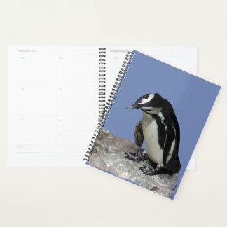 Agenda Pájaros blancos y negros del pingüino
