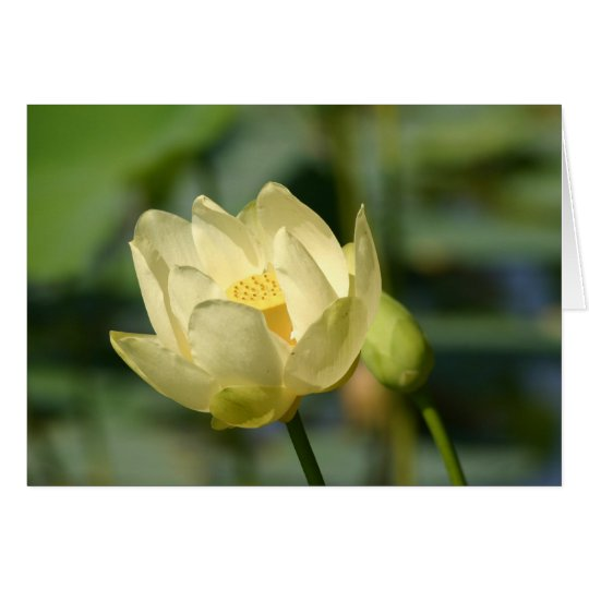 Agua Lilly Lotus Tarjeta De Felicitación