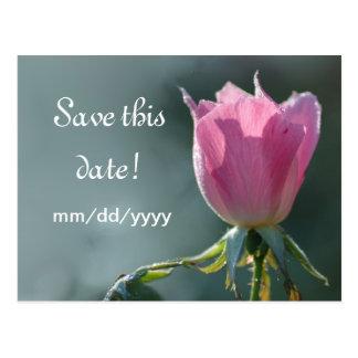 Ahorre el capullo de rosa de la fecha postales