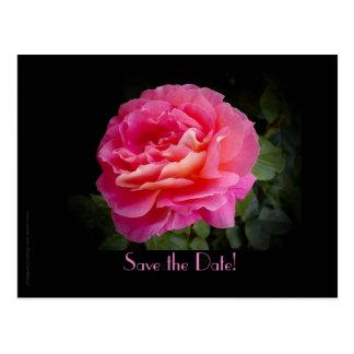 Ahorre el color de rosa rosado de la 50.a fiesta postal