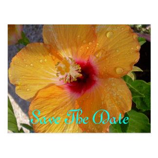 Ahorre la postal del hibisco de la fecha