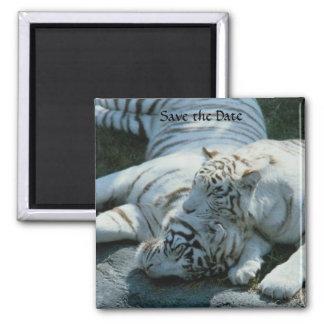 Ahorre los imanes blancos del tigre de la fecha imán cuadrado