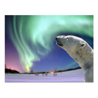 Ahorre los osos polares en peligro para el navidad postal