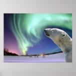 Ahorre los osos polares en peligro posters