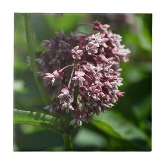 Ajenjo meridional (abrotanum de la artemisia) azulejo cuadrado pequeño