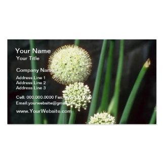 ajo ornamental blanco allium grande flores plantilla de tarjeta de negocio