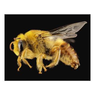 Alas de zumbido amarillas de la abeja del yesero folleto 21,6 x 28 cm
