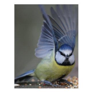 Alas hermosas del pájaro del tit azul postal