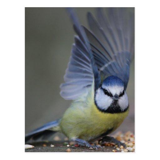 Alas hermosas del pájaro del tit azul tarjetas postales