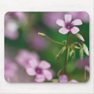 Alazán de madera rosado Mousepad