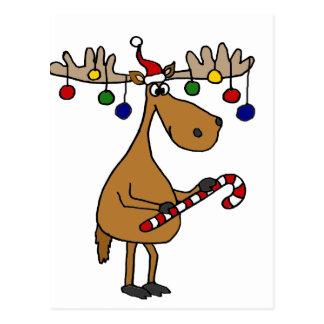 Alces del navidad de la diversión con el bastón y postal
