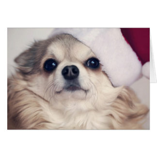 Alegría del perrito del navidad tarjeta