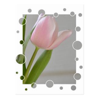 Alegría rosada del tulipán postales