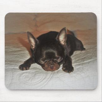 alfombras fotas timan a cachorro chiguagua marrón alfombrilla de ratón