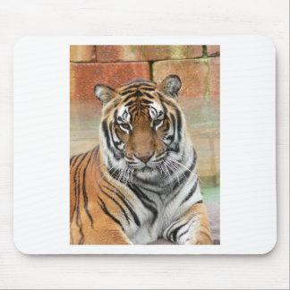 Alfombrilla De Ratón Alquileres Tigres en la reflexión
