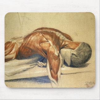 Alfombrilla De Ratón Anatomía Charles Landseer del vintage un cuerpo