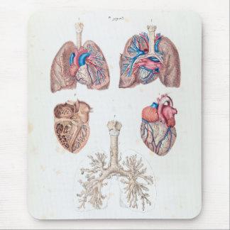 Alfombrilla De Ratón Anatomía del vintage del corazón y de los pulmones