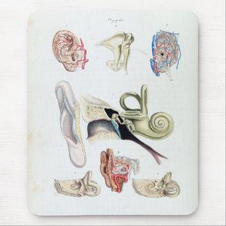 Alfombrilla De Ratón Anatomía del vintage del oído humano
