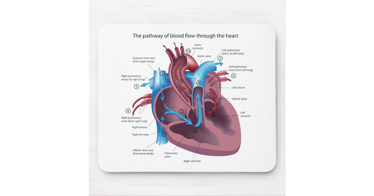 Alfombrilla De Ratón Anatomía Mousepad del corazón | Zazzle.es