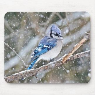 Alfombrilla De Ratón Arrendajo azul en una nevada