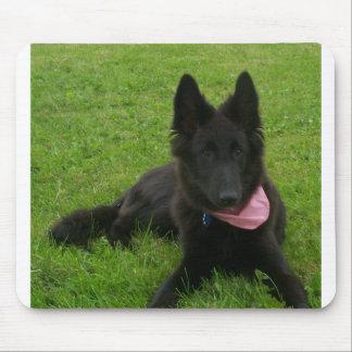 Alfombrilla De Ratón Belgian_Shepherd_Groenendael_puppy