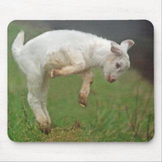 Alfombrilla De Ratón Cabra blanca del bebé divertido de la cabra que
