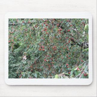 Alfombrilla De Ratón Cerezas rojas en árbol en huerta de cereza