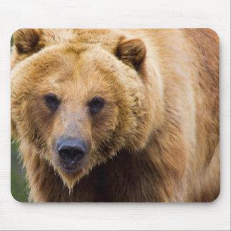 Alfombrilla De Ratón Cierre grande del oso grizzly bastante
