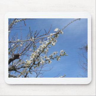 Alfombrilla De Ratón Ciruelo floreciente contra el cielo. Toscana,