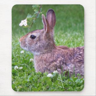 Alfombrilla De Ratón Conejo de conejito en foto del primer de la hierba