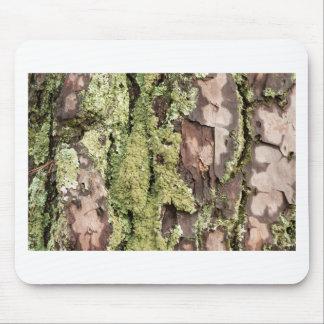 Alfombrilla De Ratón Corteza de árbol de pino de la costa este mojada